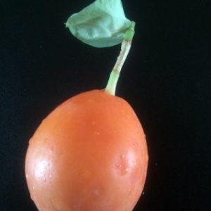 passie vrucht
